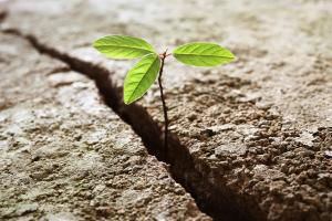 Il Green Climate Fund sostiene il Vietnam per affrontare il cambiamento climatico